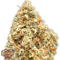 Monster Profit Feminised Seeds