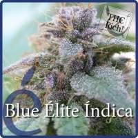 Blue Elite Indica Feminised Seeds