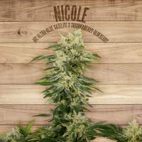 Nicole Feminised Seeds