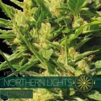Northern Lights AUTO Feminised Seeds