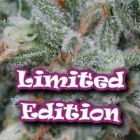 Original Ganster Feminised Seeds