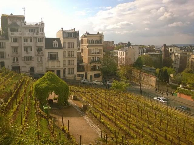 Vineyard of Montmartre
