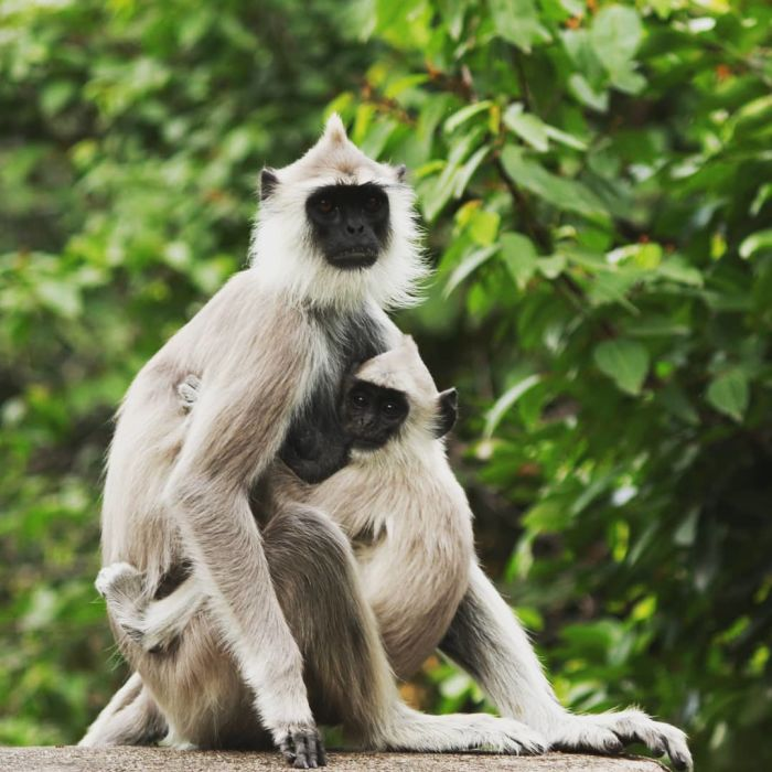 CHINNAR WILDLIFE SANCTUARY in Munnar - Cost, When to Visit