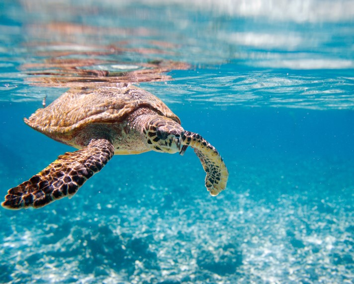 Swim with turtles