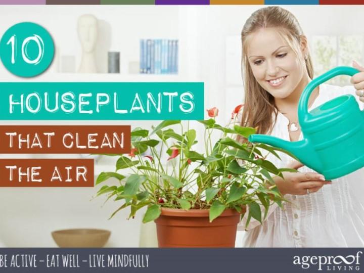 10_Houseplants