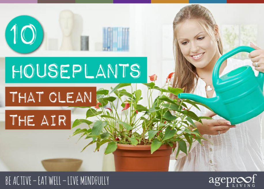 10_Houseplants