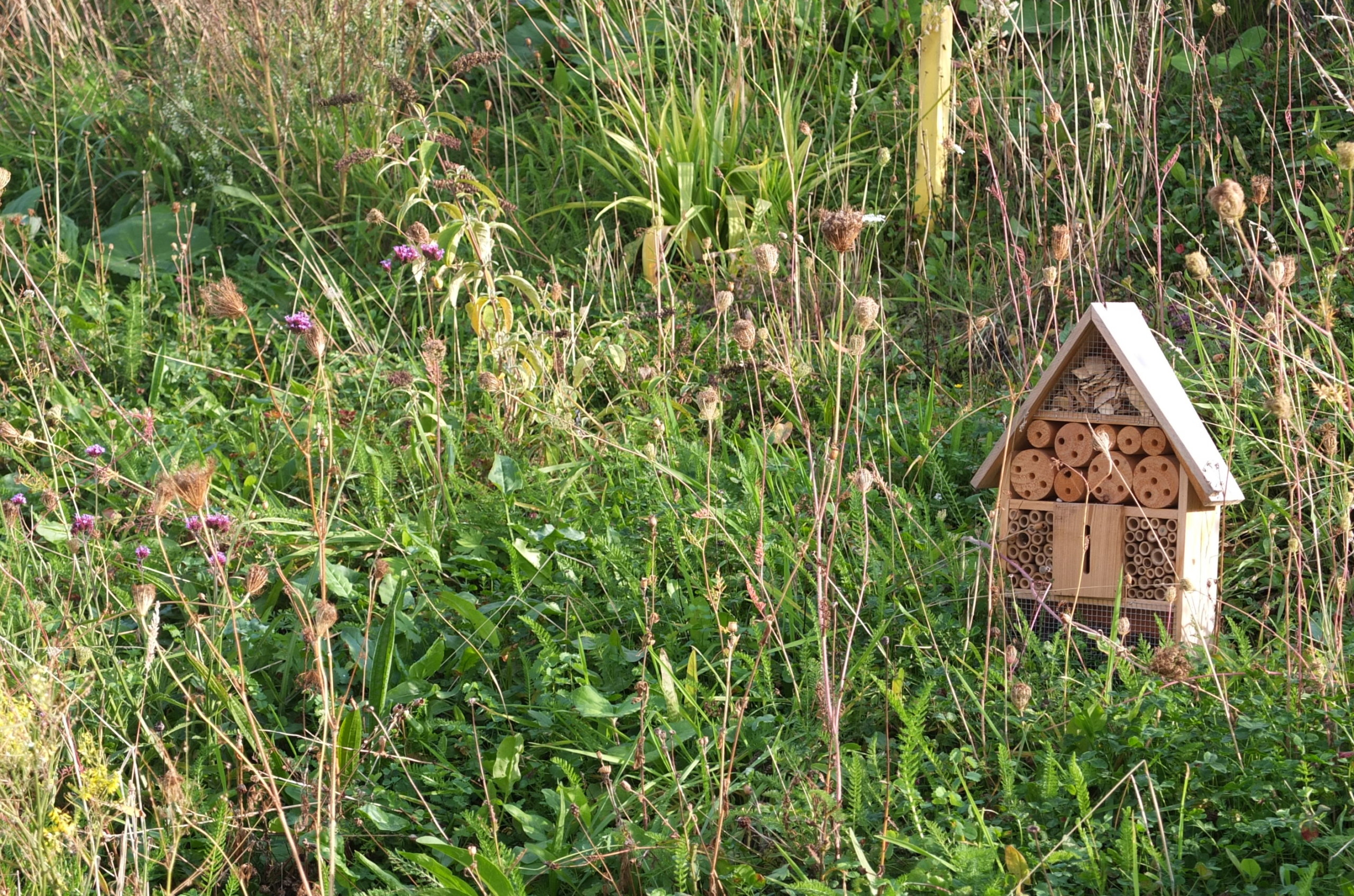Biodiversity, Ecology