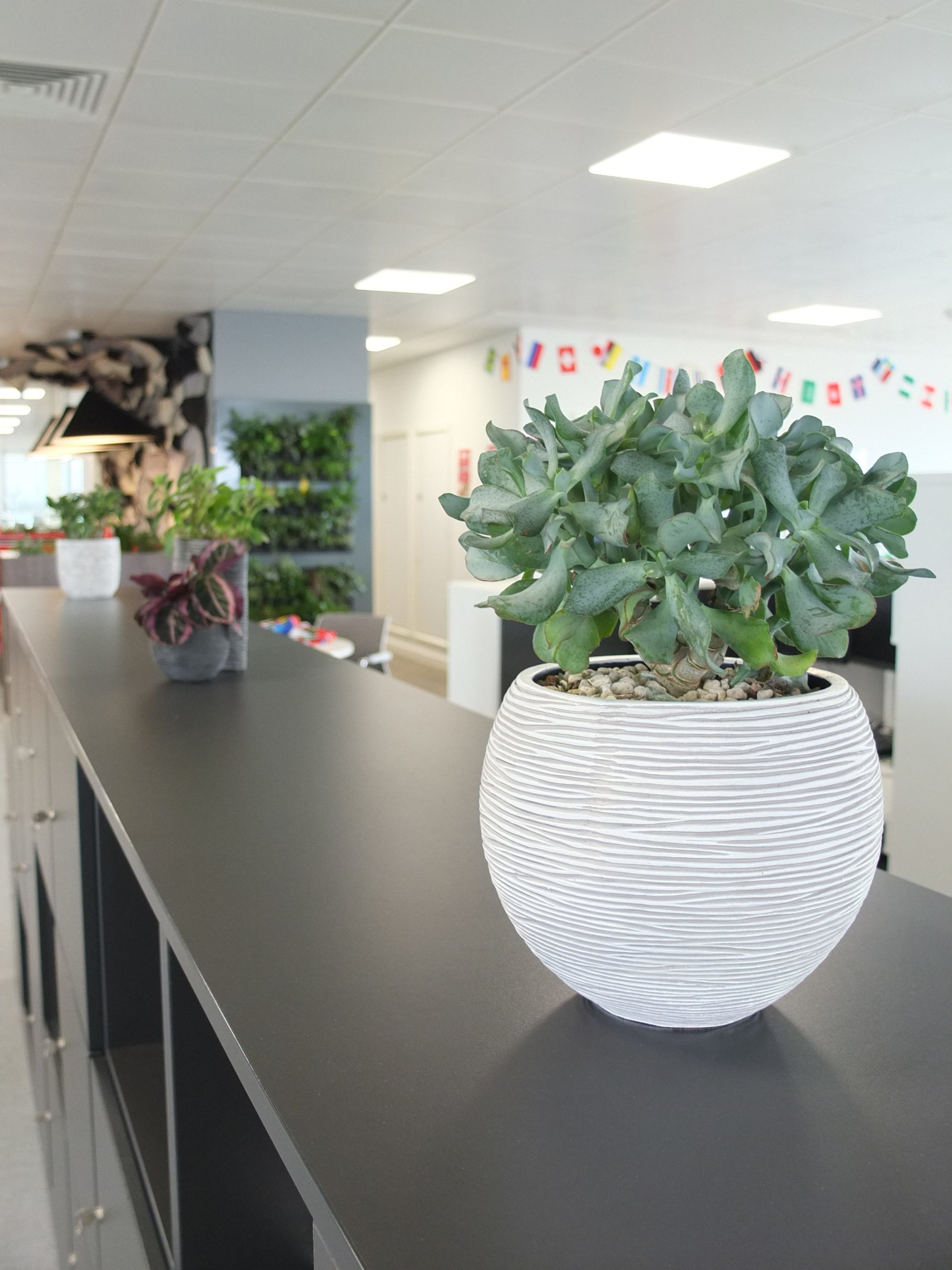 Office_plant