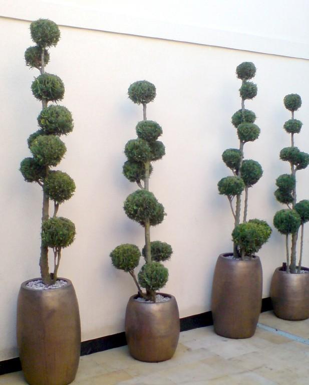 Juniperus in sepia Duo ceramic planters