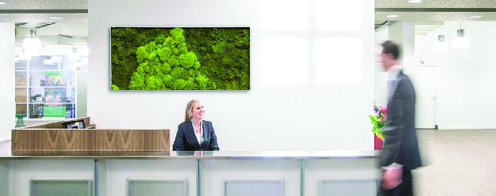 Indoor Framed Moss Art