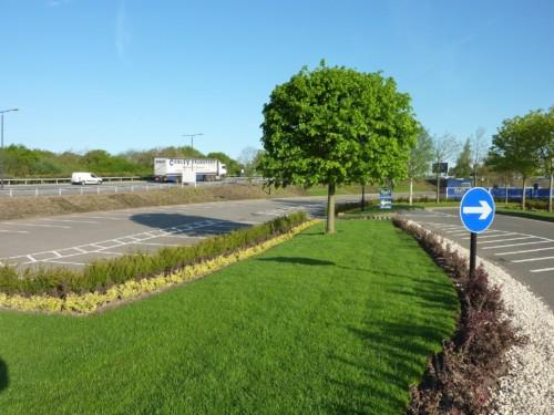 Grass Cutting & Lawn Care