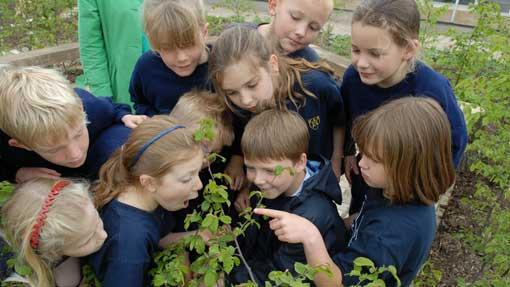 Plants_in_Schools