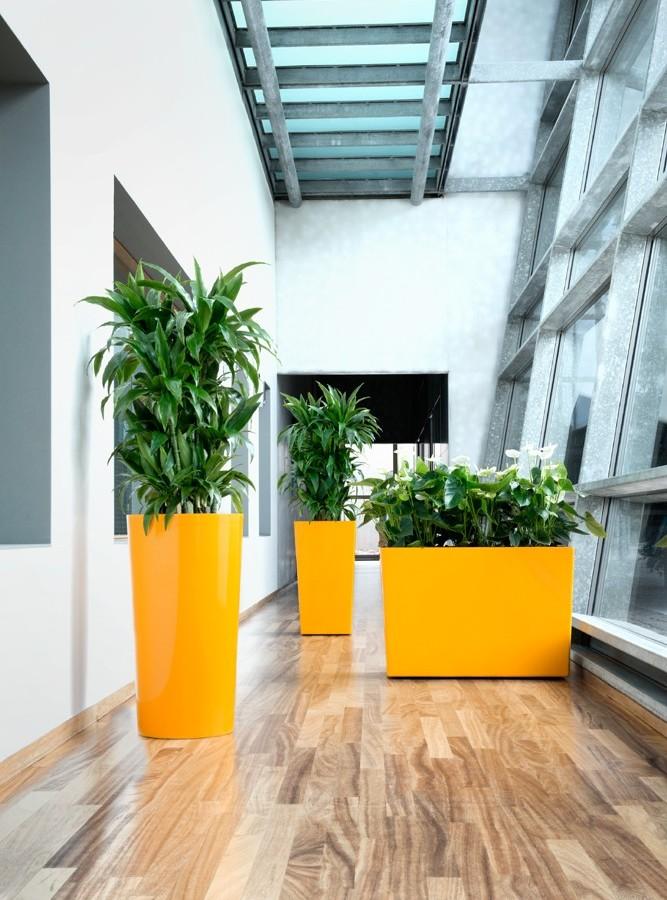 indoor_live_plant_displays
