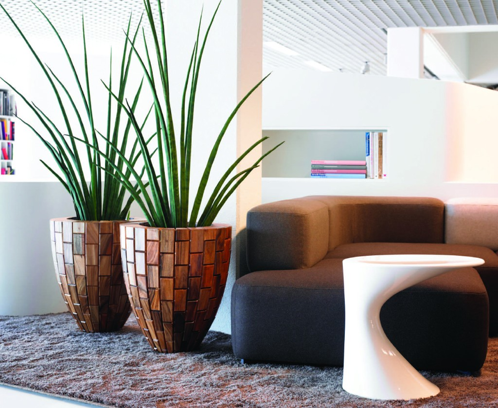 Sanseveria cylindrica in Tropical planter - artificial Plant