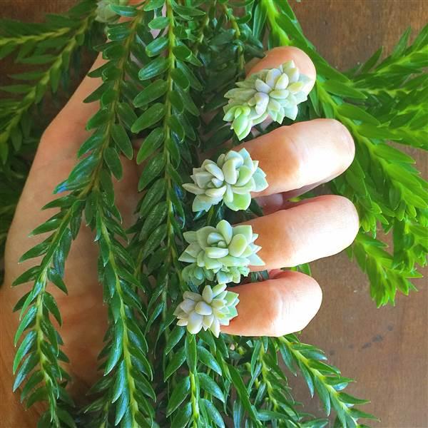 nails-succulents
