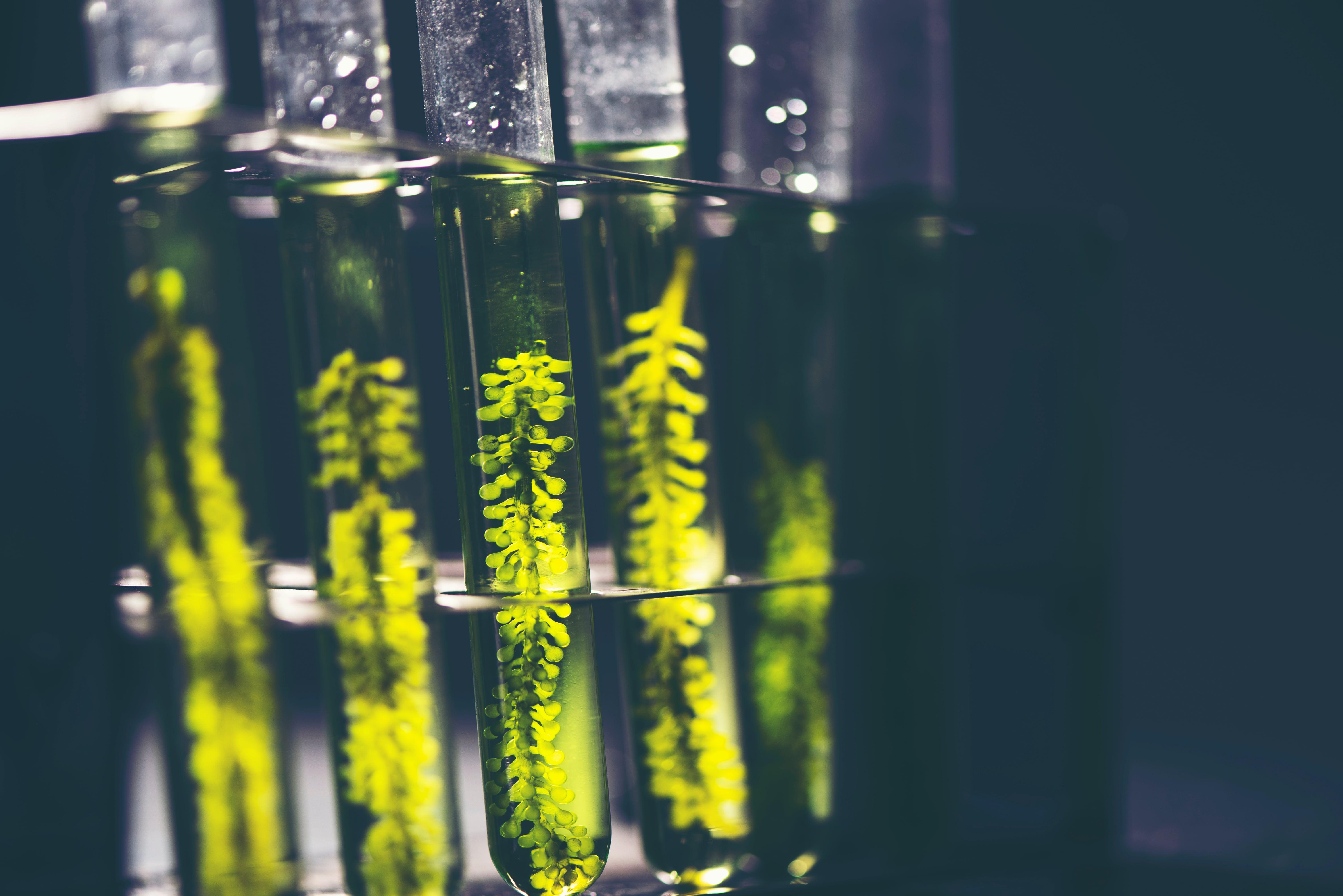 Biocombustibili e biomasse