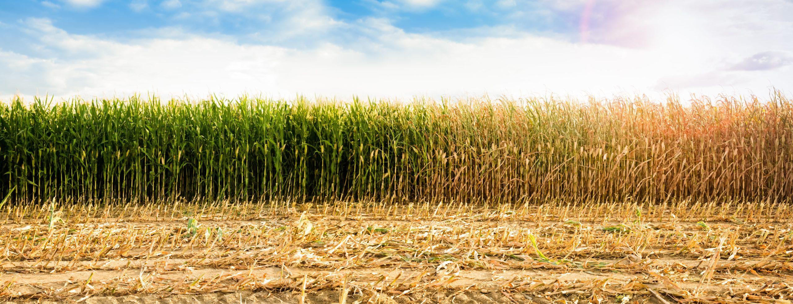 Allarme siccità in pianura padana: livello idrometrico basso