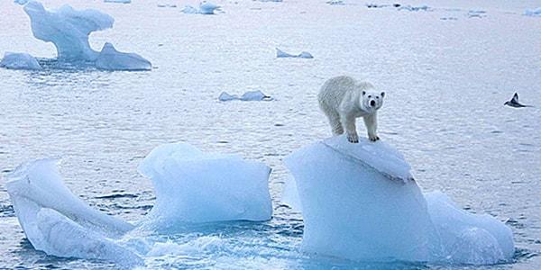 Scioglimento del Polo Nord: avviene 6 volte più veloce del previsto