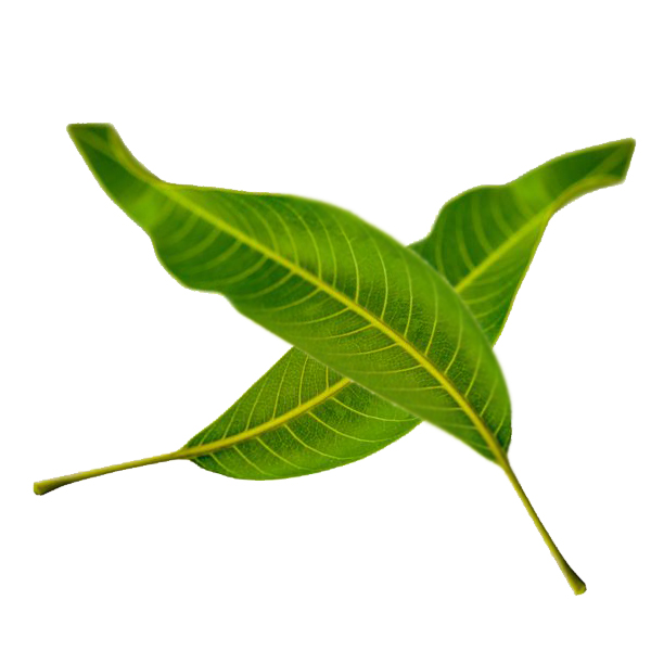 Mango Leaves 100g - £0.10